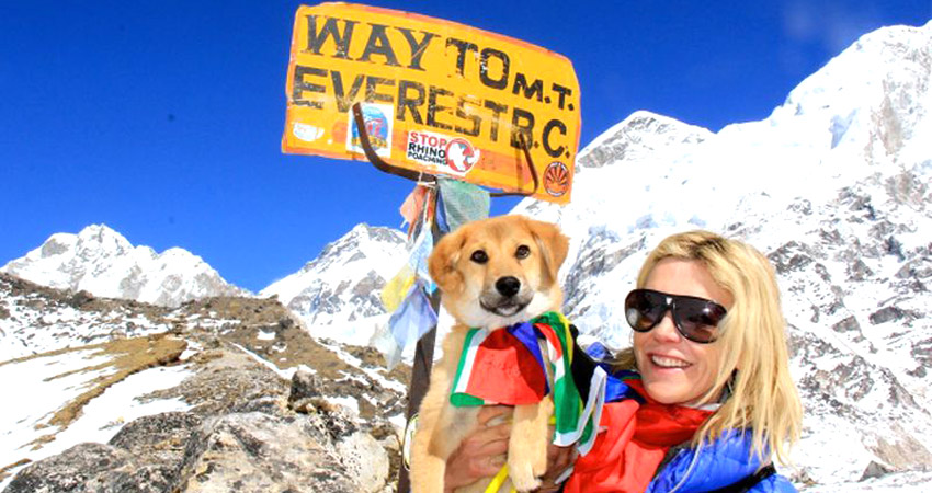 stray dog in mt everest base camp