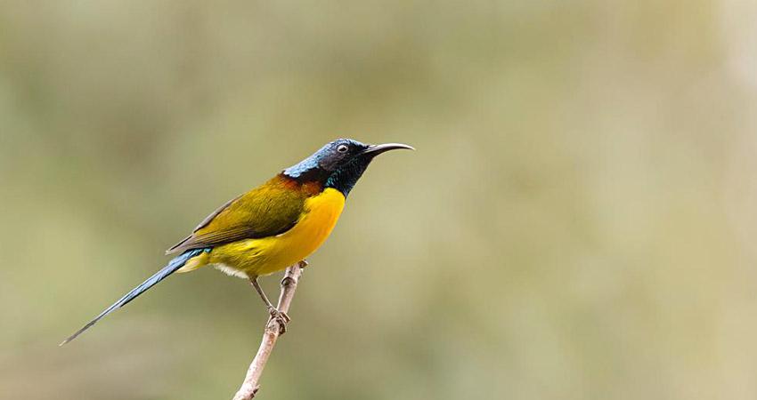 Bird watching tour in Nepal