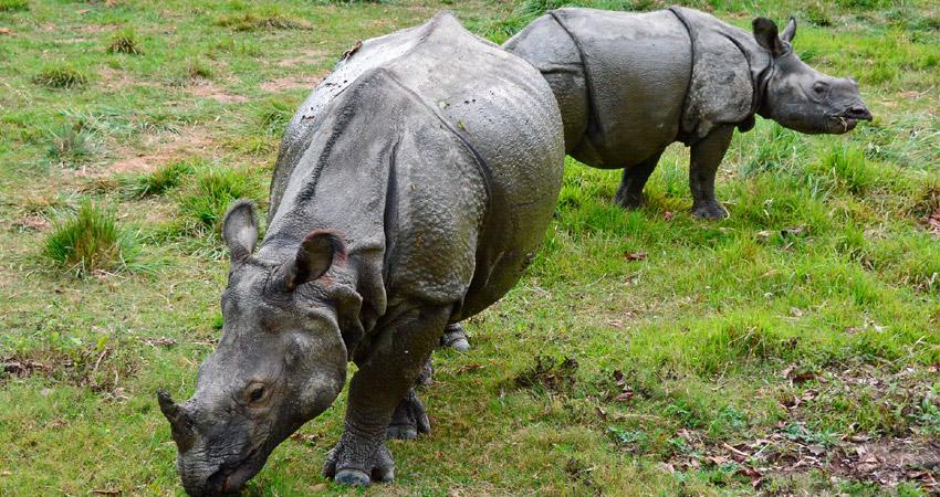 Nepal safari